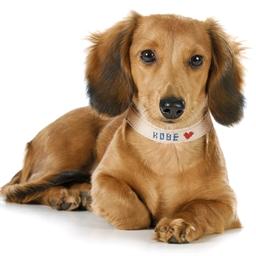 Collier pour chien à broder Taille S