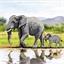 Kit carte perles à coller Eléphants